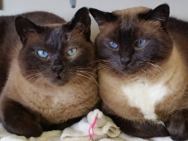 Lily & Misty